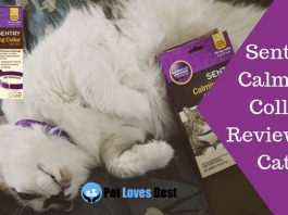 Featured Image Sentry Calming Collar Review for Cats