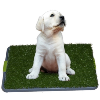 Sonnyridge Easy dog potty grass