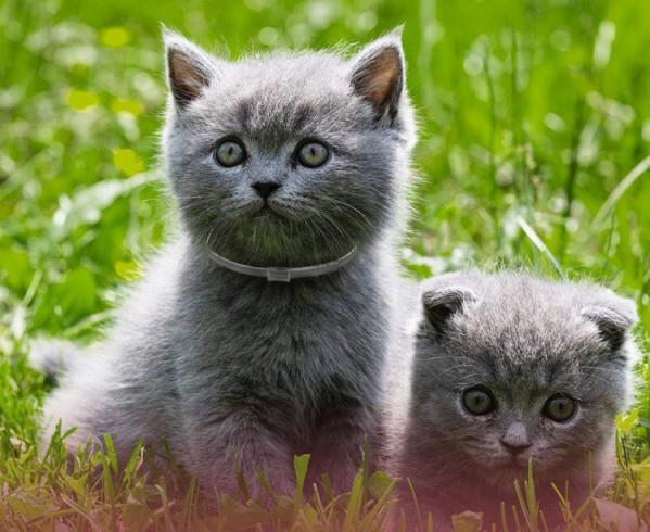 Best Cat Flea Collar