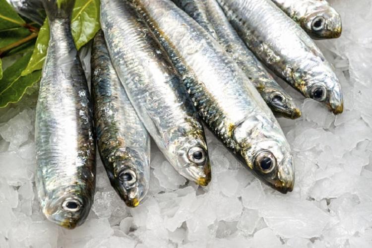 sardins as cat superfood