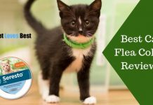 Featured Image Best Cat Flea Collar Reviews