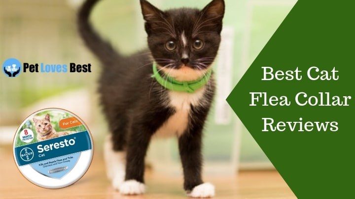 Featured Image Best Cat Flea Collar Reviews