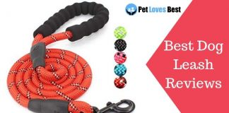 Featured Image Best Dog Leash Reviews