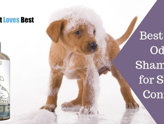 Featured Image Best Dog Odor Shampoo Reviews