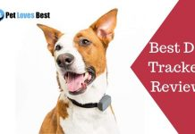 Featured Image Best Dog Trackers Reviews