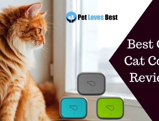 Featured Image Best GPS Cat Collar Reviews