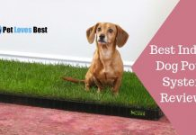 Featured Image Best Indoor Dog Potty System Reviews