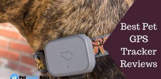Featured Image Best Pet GPS Tracker Reviews
