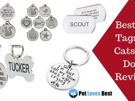 Featured Image Best Pet Tags for Cats and Dogs Reviews