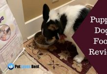 Featured Image Puppo Dog Food Review