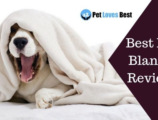 Featured Image Best Dog Blanket Reviews