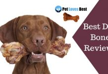 Featured Image Best Dog Bone Reviews