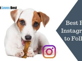 Featured Image Best Pet Instagrams to Follow
