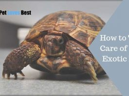 Featured Image How to Take Care of Your Exotic Pet