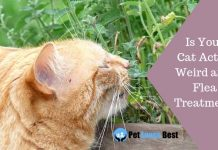 Featured Image Is Your Cat Acting Weird after Flea Treatment