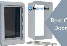 Best Cat Doors Featured Image