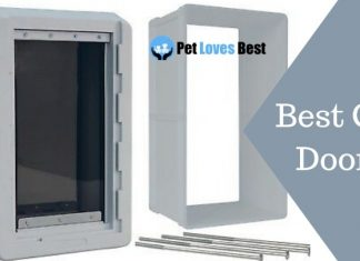 Best Cat Doors Featured Image