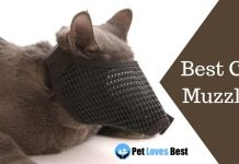 Best Cat Muzzles Featured Image