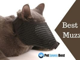 Best Cat Muzzles Featured Image