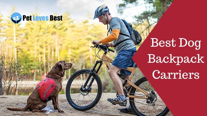 Best Dog Backpack Carriers Featured Image
