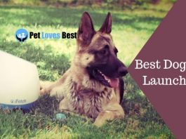 Best Dog Ball Launchers