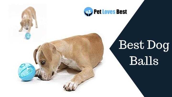 Best Dog Balls