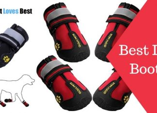 Best Dog Boots Featured Image
