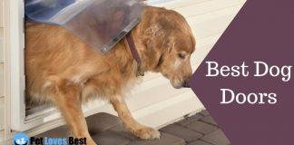 Best Dog Doors Featured Image