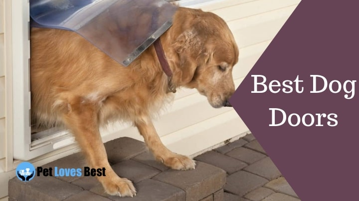 Best Dog Doors Featured Image