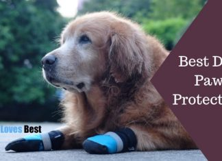 Best Dog Paw Protectors