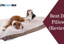 Best Dog Pillows Reviews Featured Image