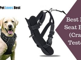 Best Dog Seat Belts Crash Tested Featured Image