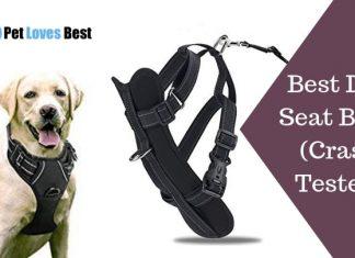 Best Dog Seat Belts Crash Tested Featured Image