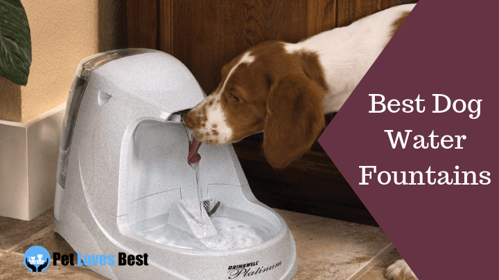 Best Dog Water Fountains Featured Image