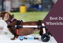 Best Dog Wheelchairs