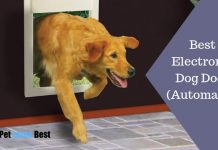Best Electronic Dog Door (Automatic) Featured Image