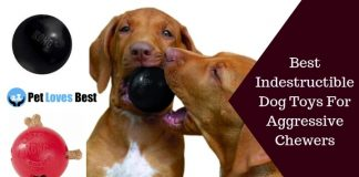Best Indestructible Dog Toys For Aggressive Chewers Featured Image