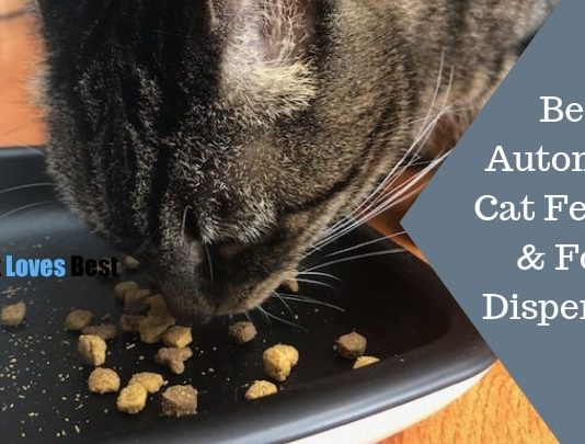 Featured Image Best Automatic Cat Feeders & Food Dispensers