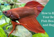 How to Keep Your Betta Fish Healthy and Happy Featured Image