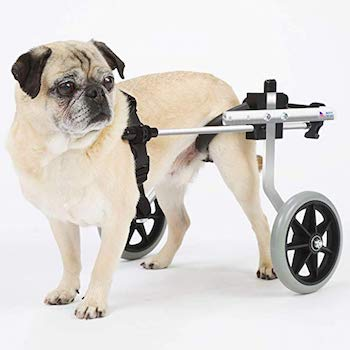 K9 Carts Dog Wheelchair designed & tested by Veterinarian