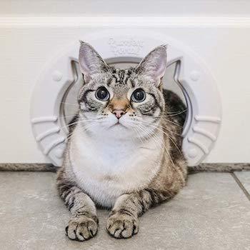 Purrfect Portal Interior Cat Door