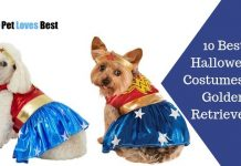 10 Best Halloween Costumes for Golden Retrievers Featured Image
