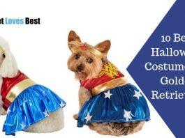 10 Best Halloween Costumes for Golden Retrievers Featured Image