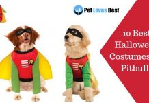 10 Best Halloween Costumes for Pitbulls Featured Image