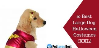 10 Best Large Dog Halloween Costumes (XXL) Featured Image