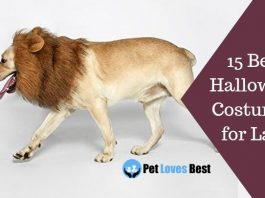 15 Best Halloween Costumes for Labs Featured Image