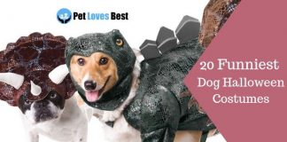 20 Funniest Dog Halloween Costumes Featured Image
