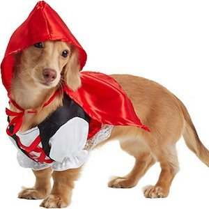 Best Halloween Costume For Dachshunds