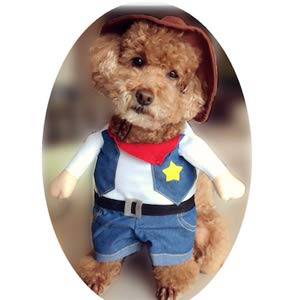 Best Halloween Costume for Small Dogs