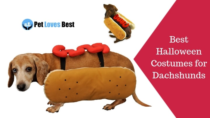 Best Halloween Costumes for Dachshunds Featured Image